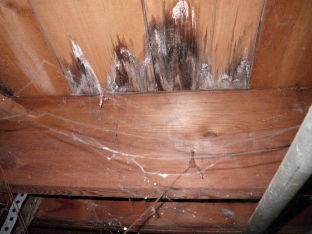 Sub Floor Water Damage Tribuzio Home Inspection Services
